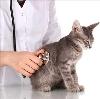Ветеринарные клиники в Альменево